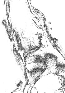 disegno 13